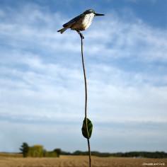 Tuteur oiseau humming