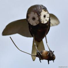 Chouette en vol et souris