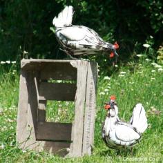 Poule lamelle blanche