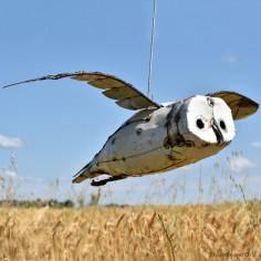 Chouette blanche en vol