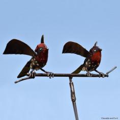 Couple deux oiseaux rock-jumper