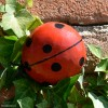 Coccinelle MM